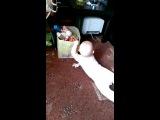 Маша и коробка с игрушками ;-)
